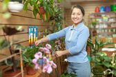 Kvinnliga florist med växtstubbar — Stockfoto
