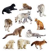 Uppsättning bilder av rovdjur — Stockfoto