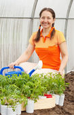Woman with tomato seedlings — Stock Photo