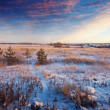 Rural wintry landscape — Stock Photo #25915489