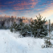 Winter landscape in morning — Stock Photo #25915613