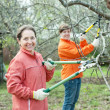 Two women pruning apple tree   — Stock Photo
