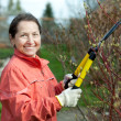 Mature woman trimming bough of an bush — Stock Photo