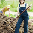 Stock Photo: Women scatters manure