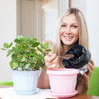 Stock Photo: Smiling woman transplants Kalanchoe plant