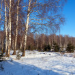 Stock Photo: Winter lanscape with birch trees