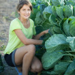 woman  in  brussels sprouts plant — Stock Photo