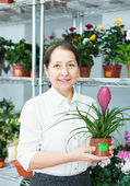 Woman in shop with Tillandsia — Stock Photo
