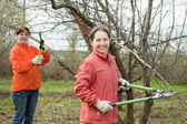 Two women trimming apple tree — Stock Photo