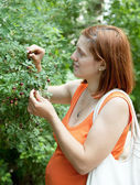 Pregnant woman gathers wild rose hips — Stock Photo