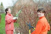 Women trimming bough — Stock Photo