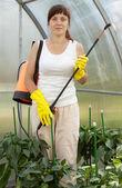 žena postřiku pepř rostlin — Stock fotografie