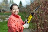 Mature woman trimming bough of an bush — Stock Photo
