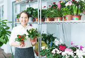 Happy florist with kalanchoe — Stock Photo