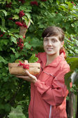 Woman picking Viburnum — Stock Photo