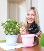 Mujer sonriente trasplantes planta kalanchoe — Foto de Stock