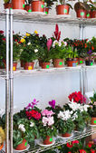 Shelves in flowers shop — Stock Photo