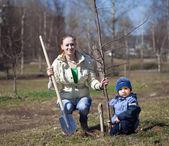 母と息子の木を植えること — ストック写真