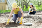 Women sows seeds in soil — Stock Photo