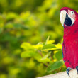 Macaw papagay at nature background — Stock Photo