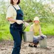 Gardeners fertilizes soil in garden — Foto de stock #25920253