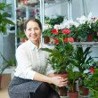 Stock Photo: Mature womchooses anthurium
