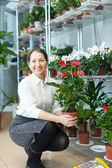 Mature woman chooses anthurium — Stock Photo