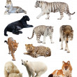 Stock Photo: Set of images of carnivores