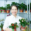 Stock Photo: Womin flower shop with kalanchoe