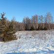 winter landscape with   forest   — Foto Stock