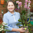 Stock Photo: Female florist with Phalaenopsis orchid