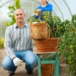 homem e mulher em tomateiro — Foto Stock