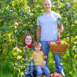 Stock Photo: Happy family gathers apples