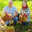 Happy couple with apples harvest — Stock Photo