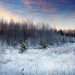 Winter landscape  in sunrise — Stock Photo
