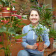 Female florist with ficus plant (Bonsai) — Stock Photo