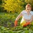 Woman working in field of beans — Stock Photo