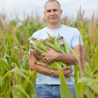 Farmer in field of corn — Stock Photo