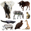 Stock Photo: Set of few africanimals