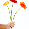 Three daisy flowers in hand. Isolated over white — Stock Photo #27495227