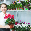Florist at flower store — Stock Photo #27495363