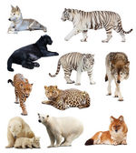 Set of images of carnivores — Stock Photo