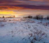 çayır altında kar karlı sabah — Stok fotoğraf