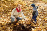 Woman with son planting tree in autumn — Stock Photo