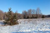 Paysage d'hiver avec la forêt — Photo