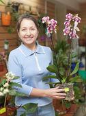 Kobieta kwiaciarnia orchidei phalaenopsis — Zdjęcie stockowe