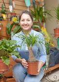 Mujer elige nolina en floristería — Foto de Stock