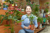 Female florist with ficus plant (Bonsai) — Stockfoto