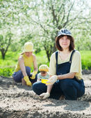 Women with child works at vegetables garden — Stock Photo