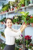 女性が花屋の店先でディーフェンバッキアを選択します。 — ストック写真
